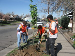Four community volunteers wearing orange vests and holding shovels plant a tree next to a sidewalk