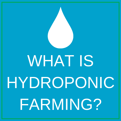 WHAT IS HYDROPONIC FARMING_