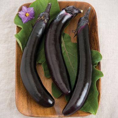 Eggplant, Orient Express (Long/Skinny)