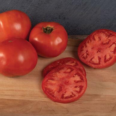 Organic Tomato, Galahad (Beefsteak/Slicing)